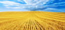 agriculture-food-grain
